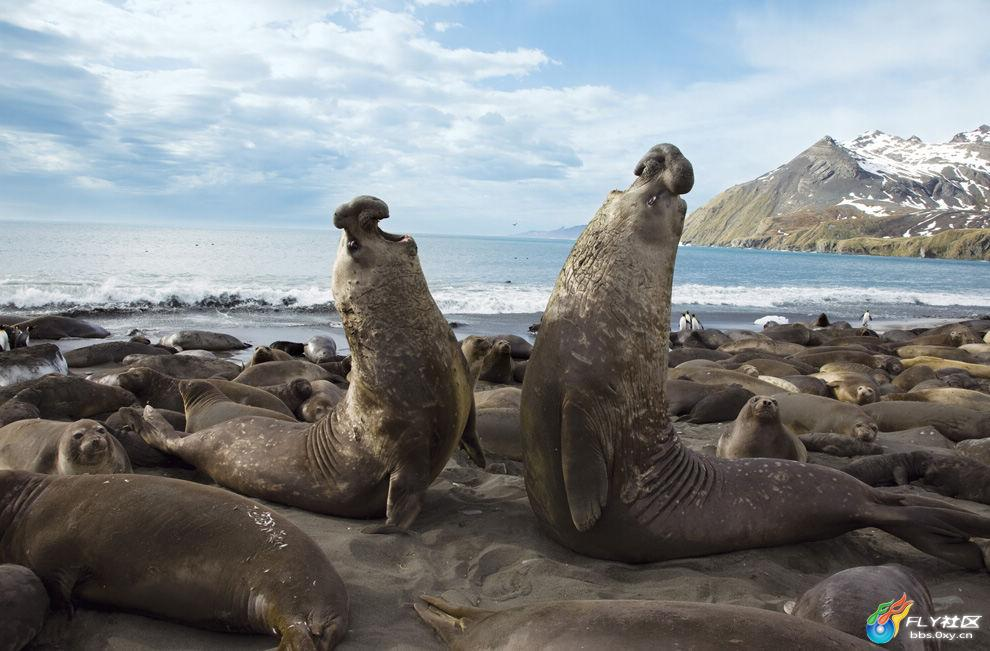 专题汇总:壮观的动物大迁徙(波士顿邮报)