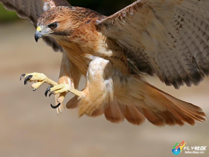 野生动物是指生存于自然状态下