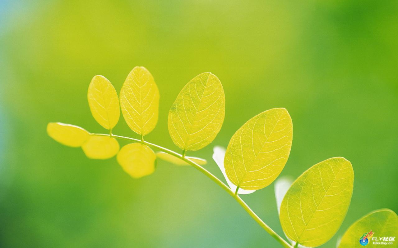 G(0yEq 绿色是自然界中常见的颜色,是一种比刚长的嫩草的颜色深些的颜色或呈艳绿,或在光谱中介于蓝与黄之间的那种颜色。这是一种对眼睛有好处的颜色,养眼绿色小清新桌面壁纸,让你疲劳的眼睛能够休息一下,而且这种小清新给人眼前一亮的感觉。 G(0yEq =750) window.open(http://att.