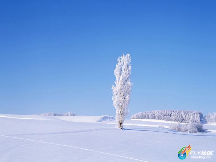 [font='Helvetica Neue', Arial, sans-serif]冬天,大雪纷飞让人们好像来到了一个幽雅恬静的境界,来到了一个晶莹透剔的童话般的世界。只见天地之间白茫茫的一片,四周像拉起了白色的帐篷,大地立刻变得银装素裹。松的那清香,白雪的那冰香,给人一种凉莹莹的抚慰。这些雪下的银装素裹特色美图,带你领略下冬季雪景的美。http://www.