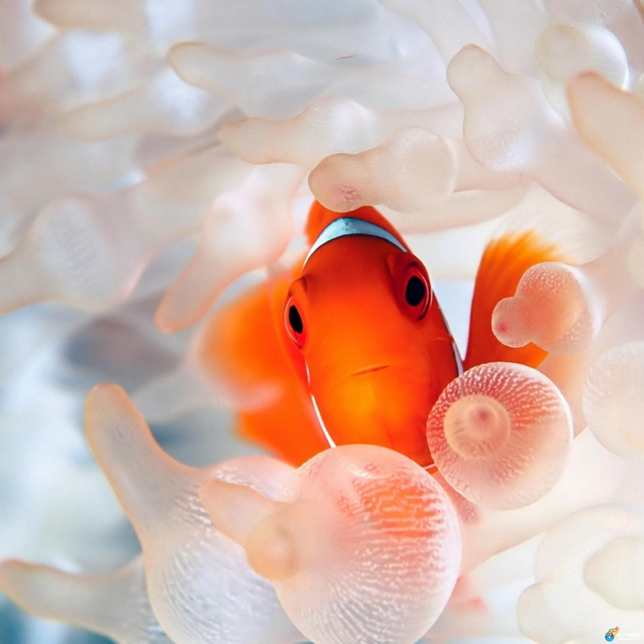 可爱的海底生物壁纸