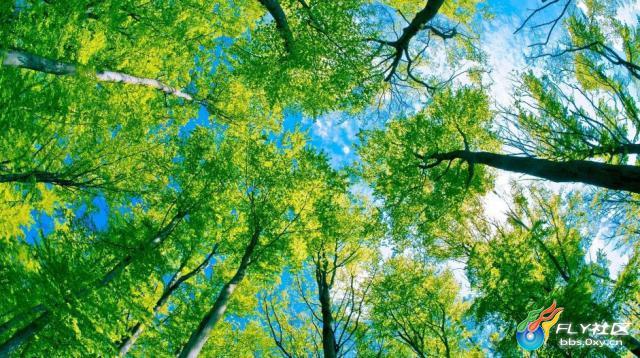 仰視綠色參天大樹高清電腦桌面壁紙